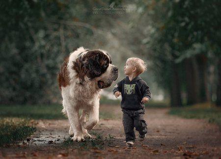 Foto : Seekor anjing yang sangat besar tetapi begitu ramah terhadap anak yang masih balita. | Vemale.com, Halaman 6