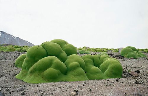 Rachel Sussman documents The Oldest Living Things In The World