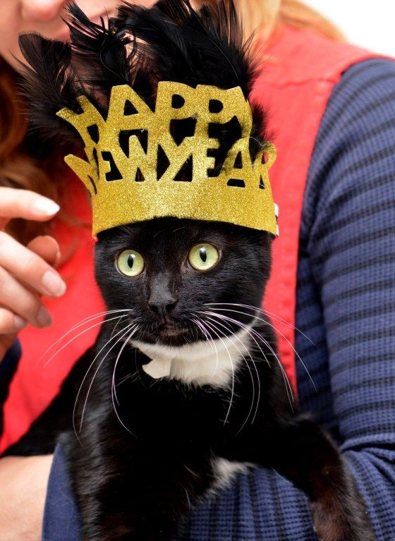 happy new years for more new years cats visit happy. Black Bedroom Furniture Sets. Home Design Ideas