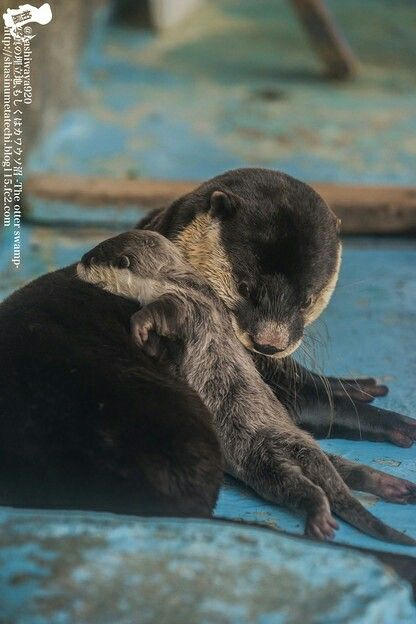 Momma otter and her pup