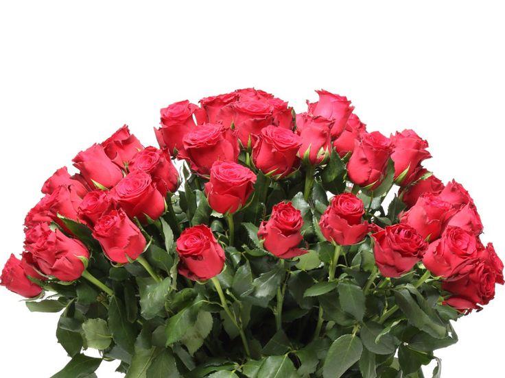 Lenyűgöző bordó rózsacsokor    #flowers#bouquet#viragszoro#viragszoroviragkuldes#red#rose#roses