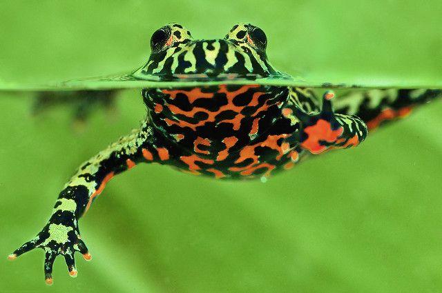 Rainforest Diver   Animals wild, Animals, Reptiles and amphibians
