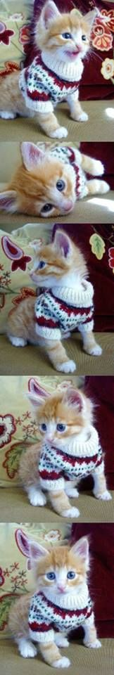 Now I want to buy my kitters sweaters. Haha