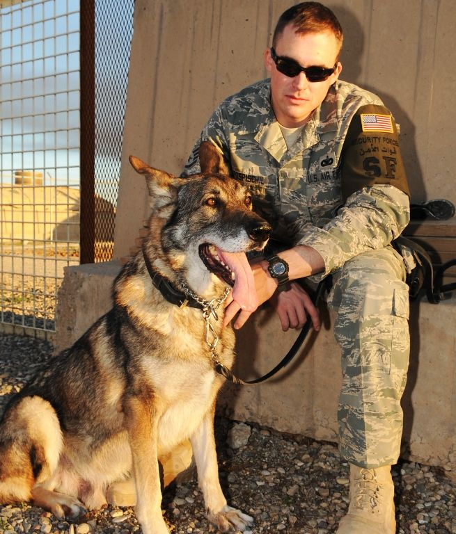 Staff Sgt. Nicholas Pospischil, 506th Expeditionary Security Forces Squadron Military Working Dog handler and his partner Wodan, a military working dog, train on an obstacle course at Kirkuk Regional Air Base Jan. 7, 2010. Wodan began his military career in September of 2003 at the age of 2 and has since served six years, including three deployments.