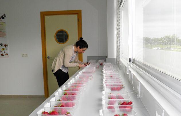 Análisis Sensorial con consumidores en fresa