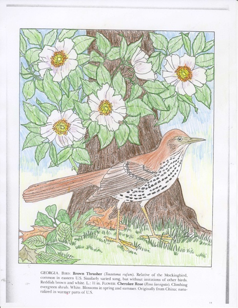 Jessica P. (12 - 18 division) from State Birds and Flowers Coloring Book: http://store.doverpublications.com/0486264564.html