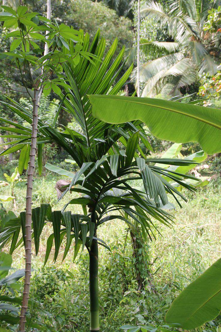 in de omgeving van HomeStay Srilanka
