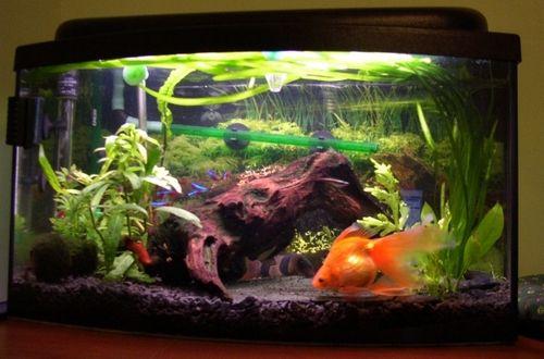 Board - FrazPC.pl - [OT] imie dla rybki