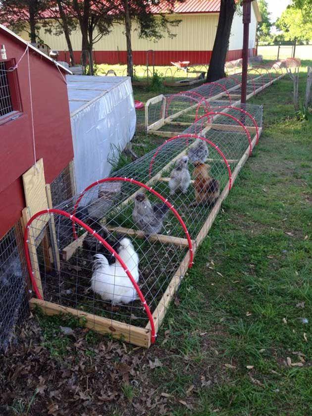 Build A Diy Chicken Tunnel In Your Backyard Garden