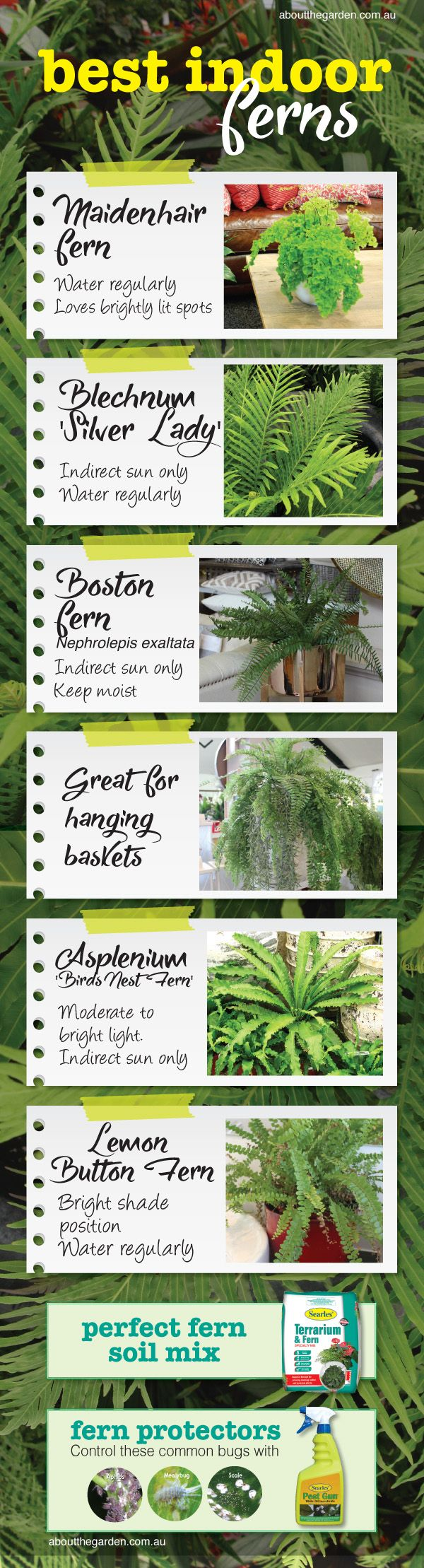 Best Indoor Ferns for home decor in Australian gardens #aboutthe