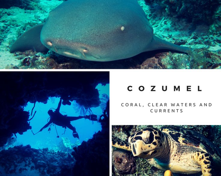 Cozumel - coral, clear waters and currents