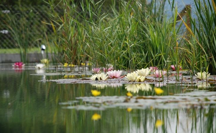 Oczko wodne Fot. rgerber - pixabay.com