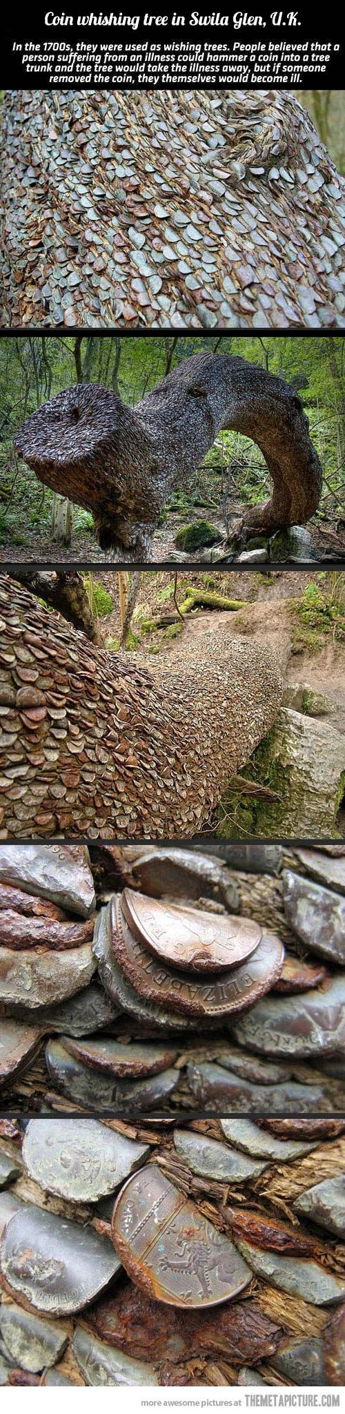 Britain's Coin wishing tree…People believed that a person suffering from an illness could hammer a coin into a tree trunks and the tree would take the illness away, but if someone removed the coin, they themselves would become ill.