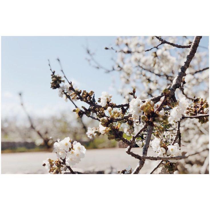 #landscape #landscapephotography #nature #naturephotography #naturelovers #tree #trees #flowers #flower #picoftheday #pic #picture #photography #photooftheday #photo #travel #sky #blue #colors #color #colorful #sun #instasize #vsco #vscocam #beautiful #puglia #italy