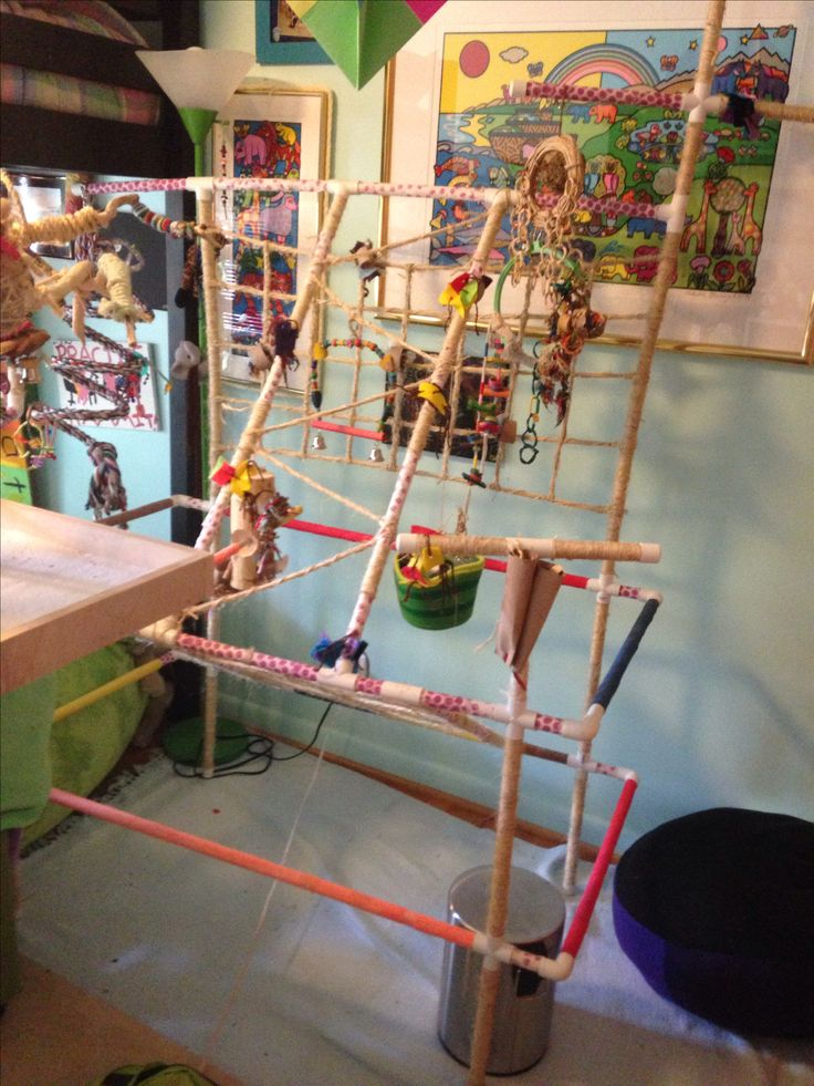Pvc conure bird play gym easy weekend diy parrot made by