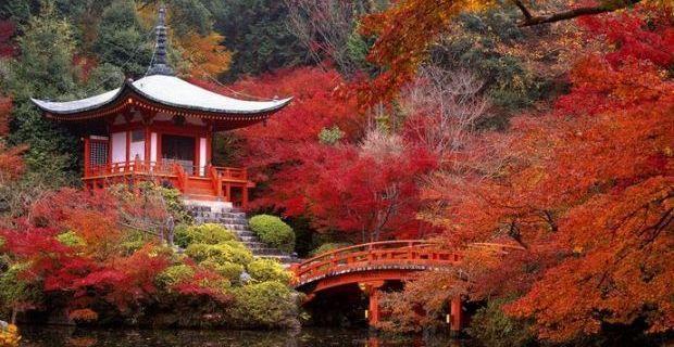 Apre il Giardino dell'Istituto Giapponese di Roma, info e orari