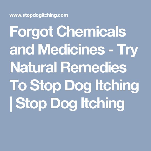 Forgot Chemicals and Medicines - Try Natural Remedies To Stop Dog Itching | Stop Dog Itching