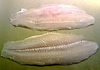 Aldi voluntarily recalls Sea Queen Frozen Swai Fillets 21-Jun-16. AKA iridescent shark (Pangasianodon hypophthalmus), panga, Siamese shark or sutchi catfish. Not a shark. Native to the rivers of Southeast Asia. Comes from Mekong basin and Chao Phraya River. Image source: wikipedia.org.