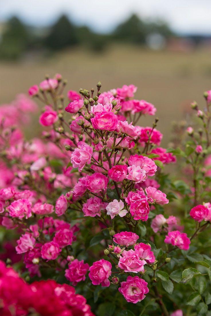 67 best gardening with flowers images on pinterest | garden ideas