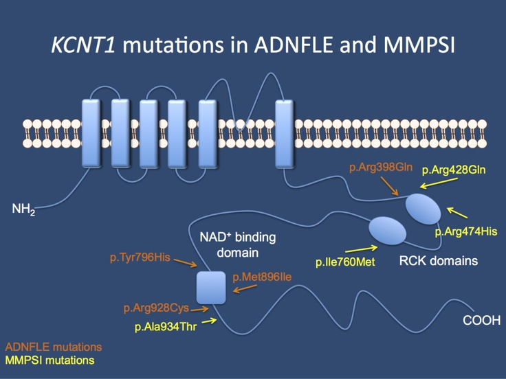 A new spectrum unfolding – KCNT1 mutations in ADNFLE and MMPSI