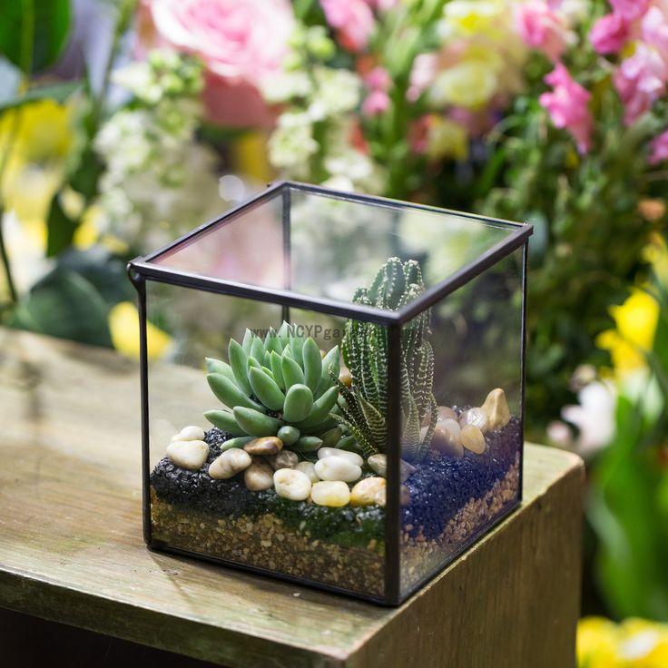 Small Square Clear Glass Geometric Terrarium Box Succulent