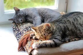 Katzen aneinander gewöhnen – So klappt die Katzen Zusammenführung (in 5 Schritten)