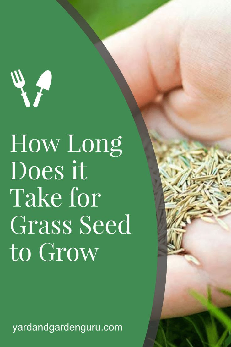 How long does it take for grass seed to grow in 2020