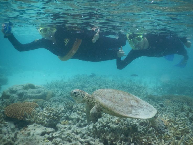 Swimming with a Green Turtle at the Great Barrier Reef, Whit Sunday', Australia