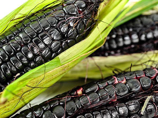 Maiz Morado or Kulli Corn | Baker Creek Heirloom Seeds