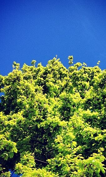 Anywhere you are in Stellenbosch. Look up.