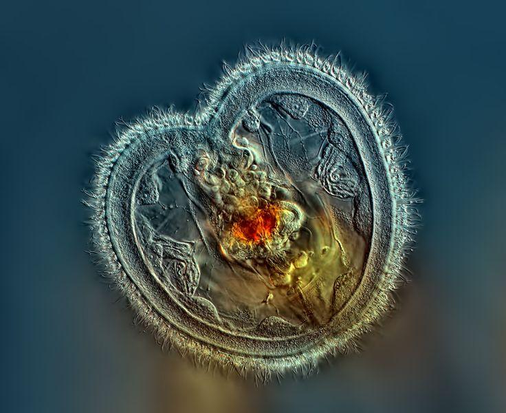 microscopische fotografie - Google zoeken