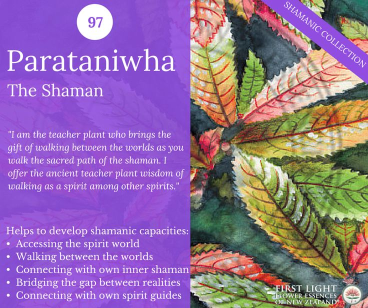 Parataniwha - The Shaman - helps to access the spirit world. Assists in walking between the worlds, connecting with your inner shaman and connecting with your guide to the spirit world. Helps to bridge the gap between ordinary and non-ordinary reality.