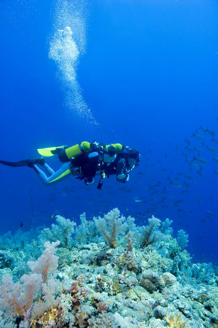 27 best best scuba diving places to go images on pinterest perfect way to sea the palm beaches xflitez Images