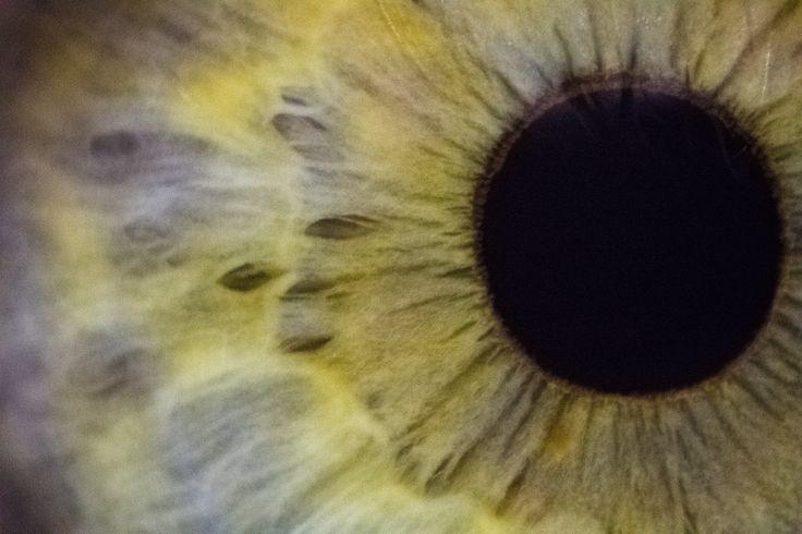Iris by Giorgi Kolbaia on 500px