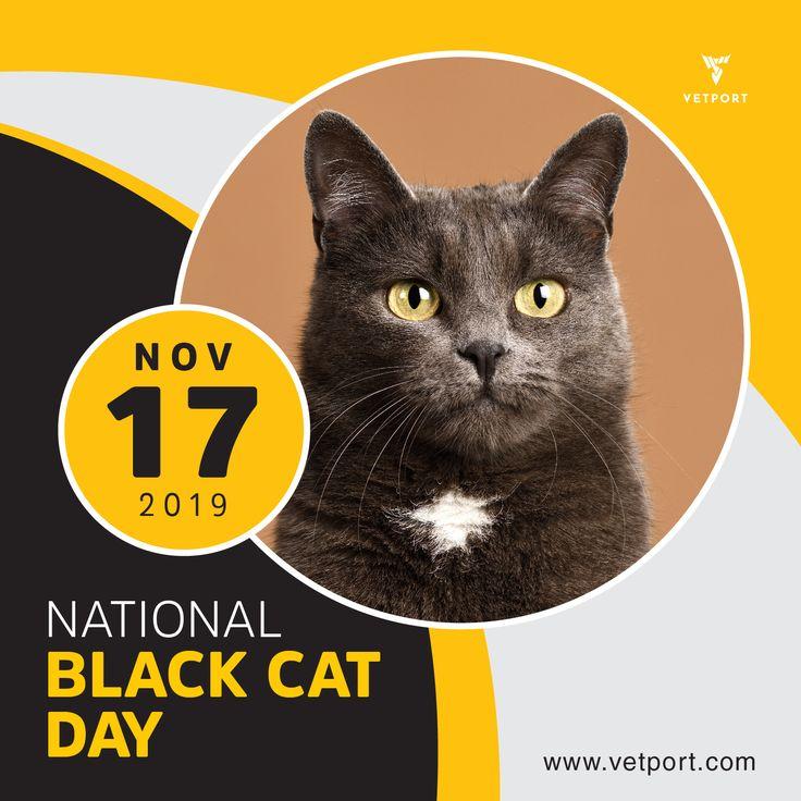 National Black Cat Day November 17, 2019 BlackCat