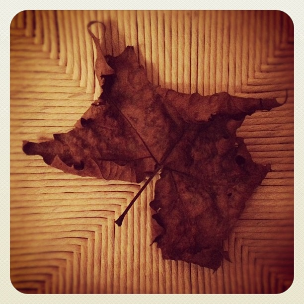 "@mauroparolo's photo: ""#leaf #iger #iphone #autunno"""