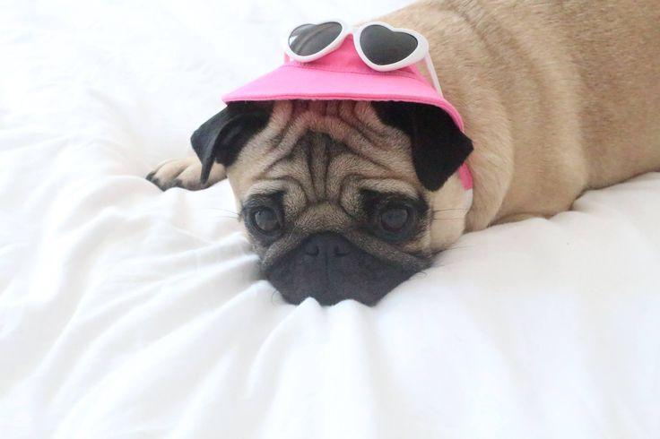 Tilly Pug  www.loulabeth.co.uk