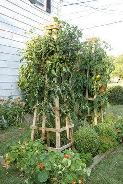 DIY tomato tower trellis instructions