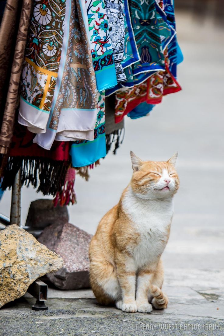 The Cats of Istanbul - World Meets Girl