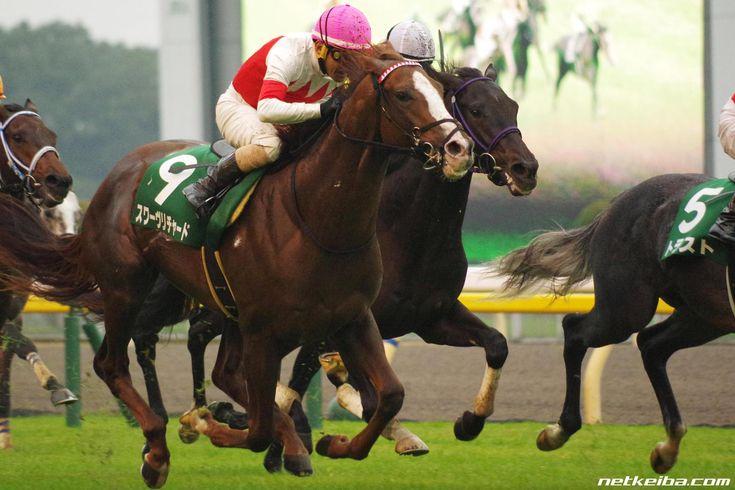 スワーヴリチャード みんなの投稿写真|競走馬データ - netkeiba.com