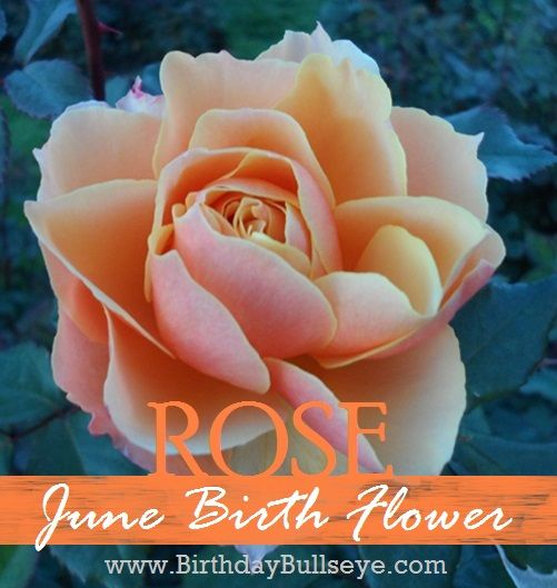 June Birth Flower: Rose meaning love and beauty.