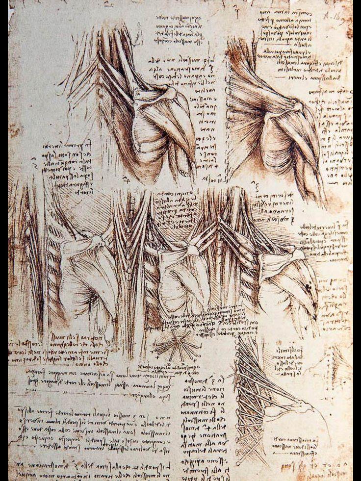 Da vinci female anatomy