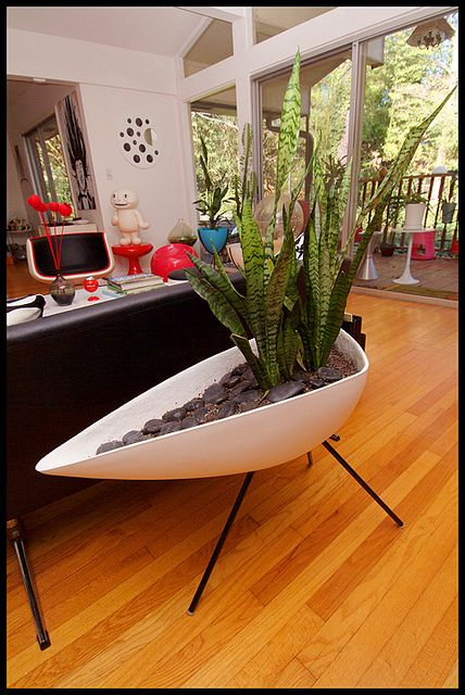 """this plant is one of my favs! It's common name is """"Mother In Law's Tounge"""" according to my Landscape Architect Dad! Another reason to love the plant. Mid-Century modern planter, Atomic tripod planter"""