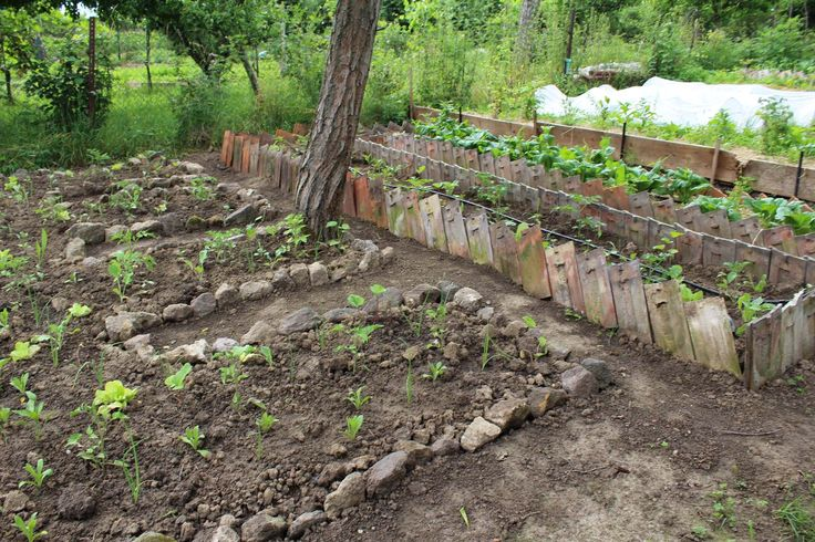 New raised bed from stones - Nový vyvýšený záhon z kameňa