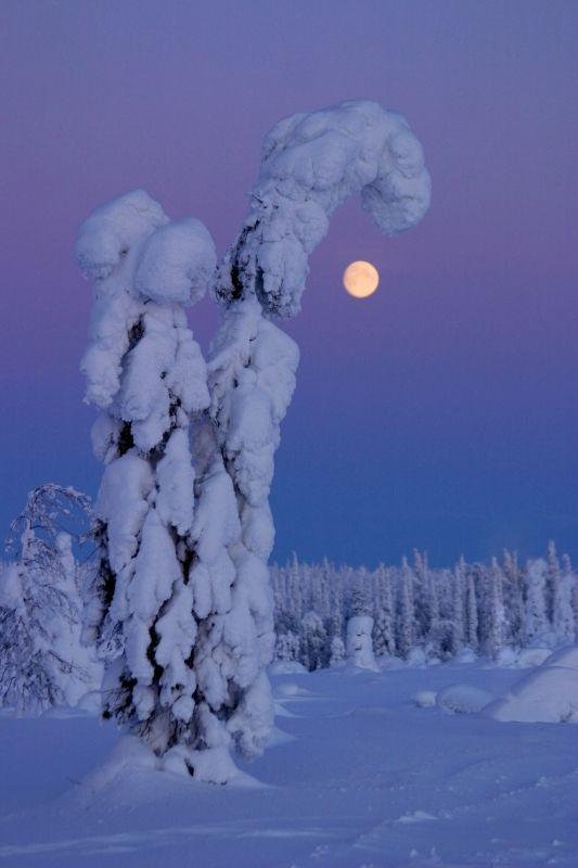 Full moon in a winter night in Kuusamo, Finnish Lapland