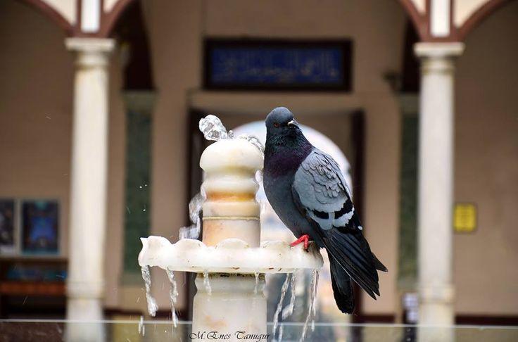 #düğün #sünnet #kına #nişan #fotoğraf_çekimleri #özle_gün #foto #fotoğrafçı #dugun_fotografcisi #kuş #bursa #çeşme #su #camii #asil #huzur  https://www.facebook.com/pages/Tanu%C4%9Fur-Grafiker-Tasar%C4%B1m-ve-Photography/592028624211983?ref=ts&fref=ts