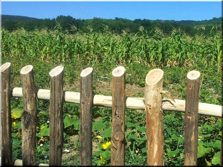 Rusztikus akác kerítés, rönkkerítés