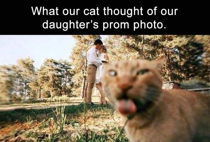 Funny Pictures Of The Day – 67 Pics