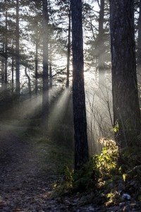 Beautiful sunrays, picture made by Bart Lebesque