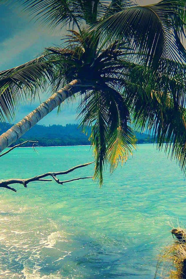 196 best images about phone wallpaper on pinterest - Palm tree wallpaper for android ...